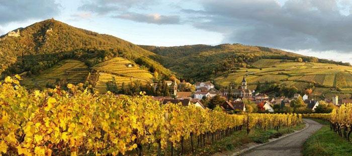 Wein erleben, durch die Weinberge spazieren, die Traube an der Rebe verkosten. Mehr über Boden, Klima und Sorten erfahren. Unterhaltsam und spannend, humorvoll und einfühlsam führe ich sie durchs das Elsass.
