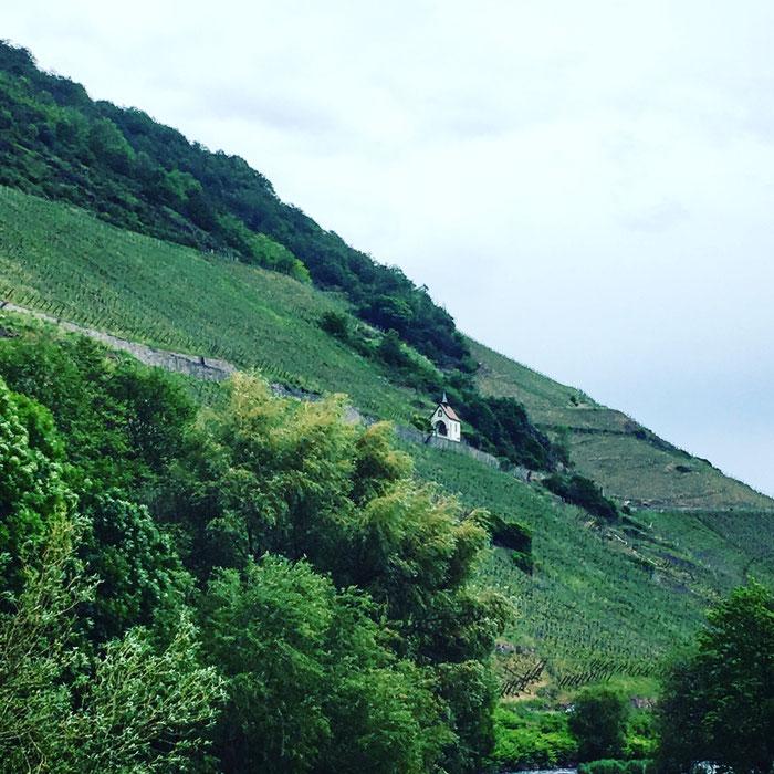 """Parcourir un grand terroir  : Le Rangen de Thann  """"Au fond du verre, je veux retrouver le paysage du lieu où je suis"""" Jacques Puisais"""