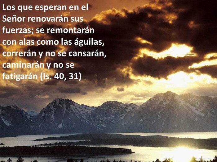 Frases De La Biblia Desarrollo Personal Superación Y