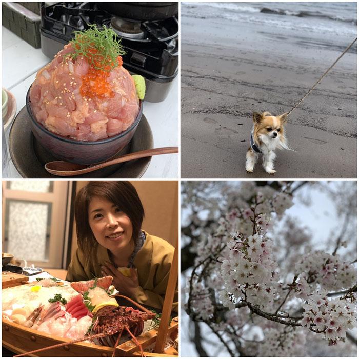 犬と伊豆旅行