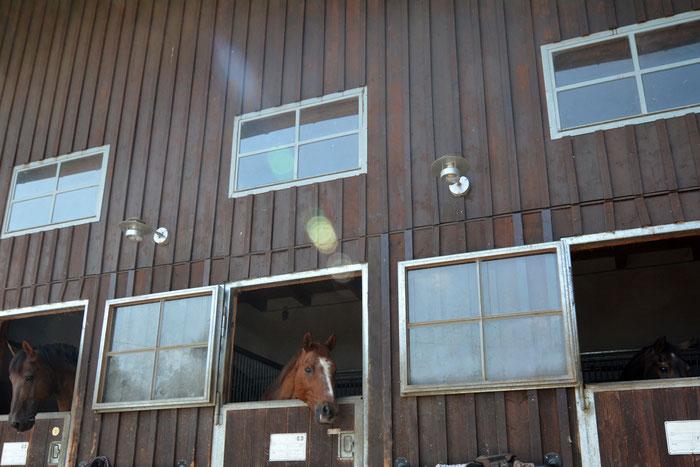 3 Hengstboxen für Mr. Wichtig! höhere Trennwände und etwas abseits vom Stutentrubel. Aber immer die Nase im Wind!