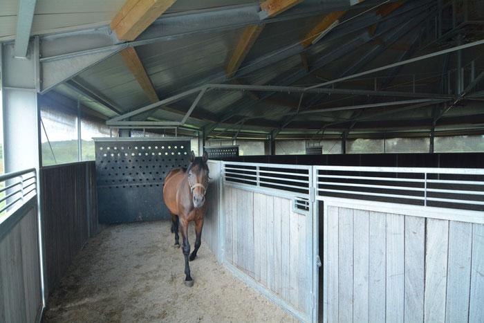 Ein zufriedenes Pferd: mit den Kumpels täglich ein paar extra Runden drehen. Gut für die Kondition, Durchblutung, Seele und den Reiter