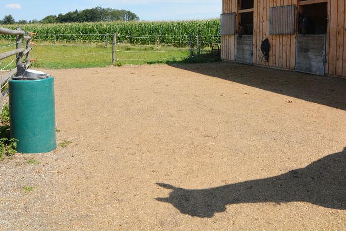 Im Frühling eingeweiht, unsere beiden Aussenboxen, auch als Paddock anmietbar. Mit oder ohne Trennwand mit Auslauf herrlich für 2 bis 3 Pferde