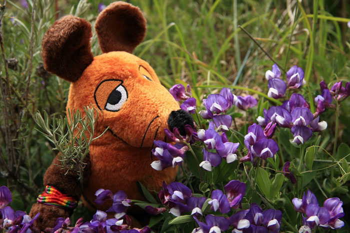 Maus wollte an jeder Blume riechen. Sie waren aber auch zu schön !