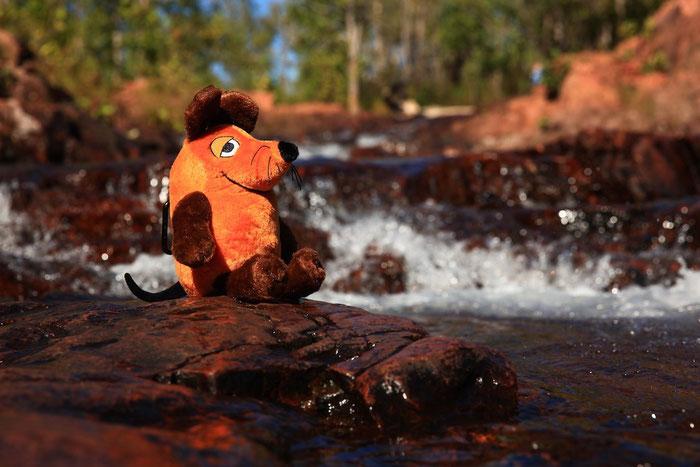Maus kühlt sich im Litchfield NP an einem natürlichen Pool ab.