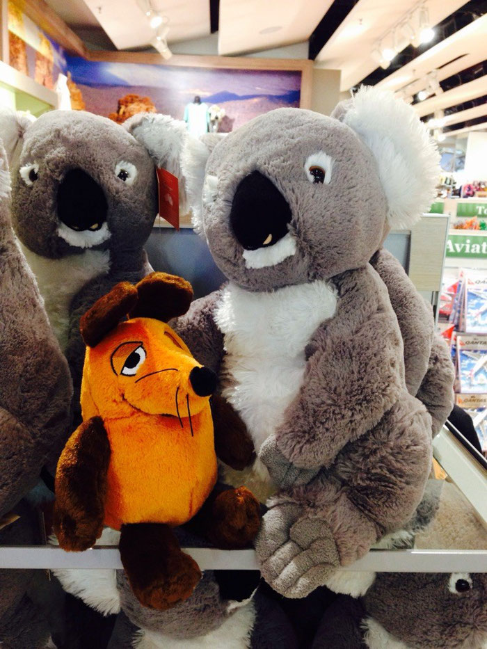 Ob die echten Koalas auch so weich sind ?