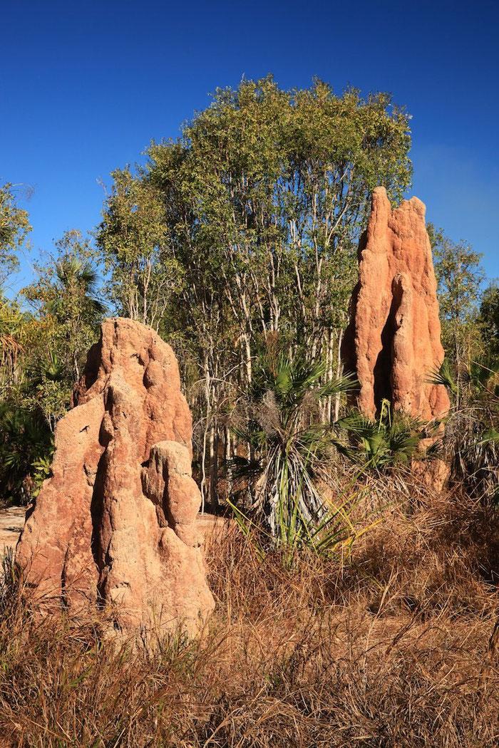 Termitenhügel pflastern unseren Weg durch Australiens Norden