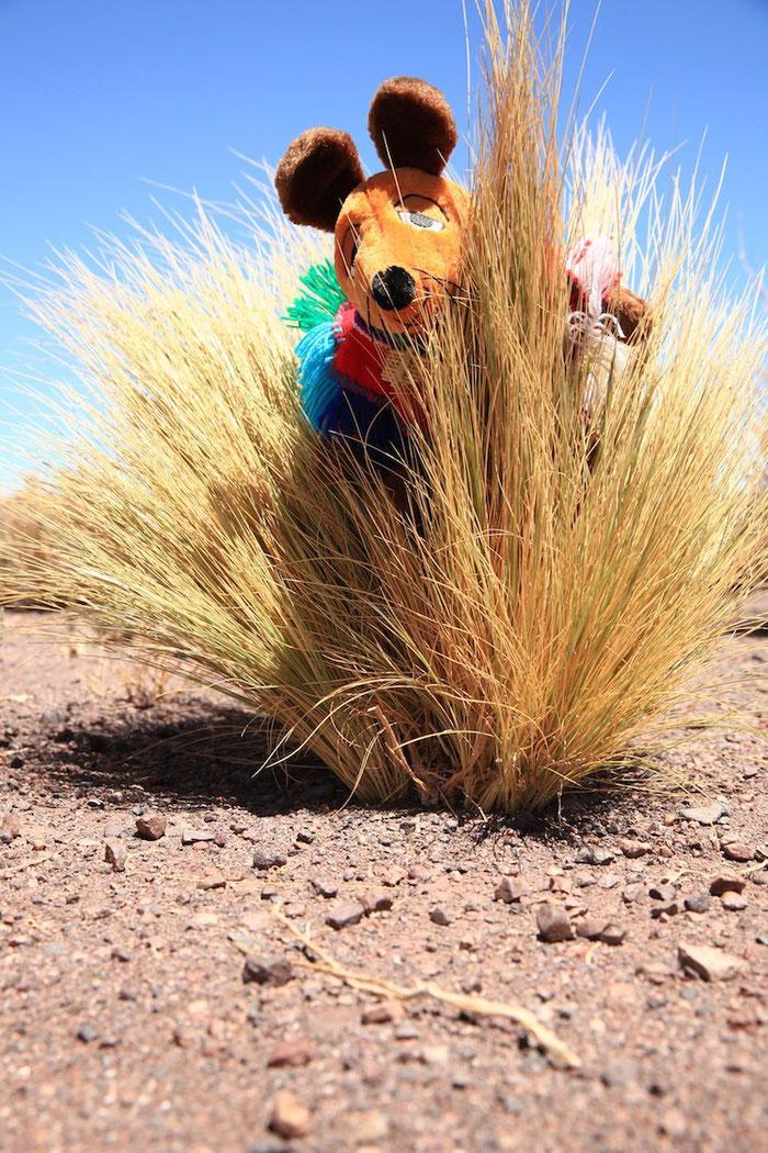 Finde die Maus im Pampasgras