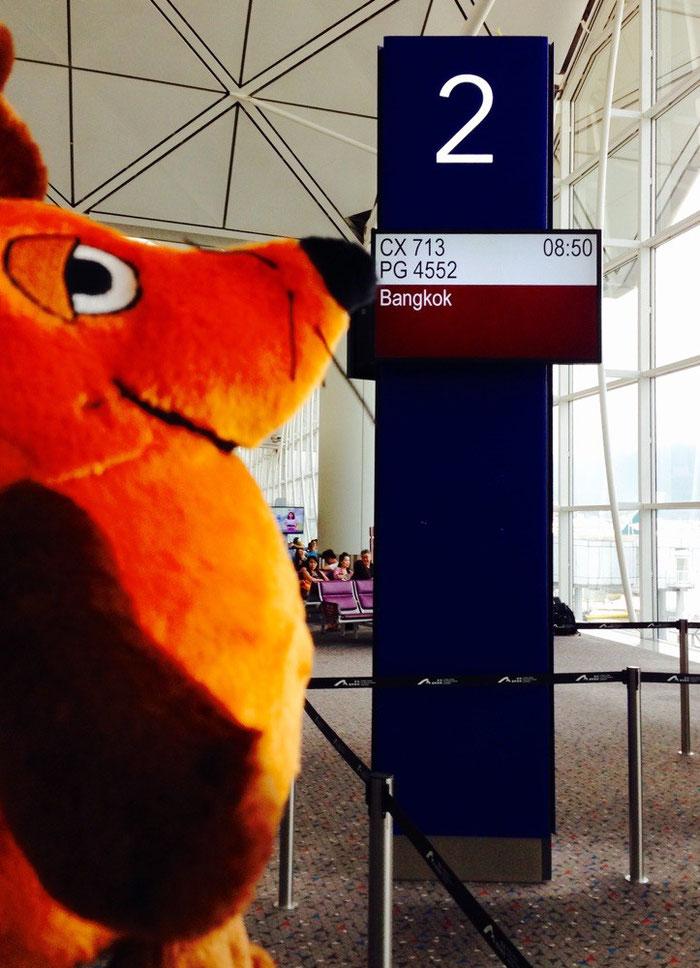 Die Maus freut sich nach dem langen Flug von Frankfurt nach Hongkong, endlich ihre Stummelbeinchen bewegen zu können. Natürlich entdeckt sie als Erste das Gate für den Anschlussflug.