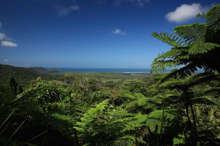 Lookout am Waluwurrigga - oder einfacher gesagt: Alexandra Range Lookout Point im Daintree NP