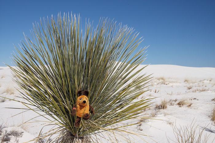 Es ist so herrlich im White Sands NM im Sonnenschein ohne Wind !