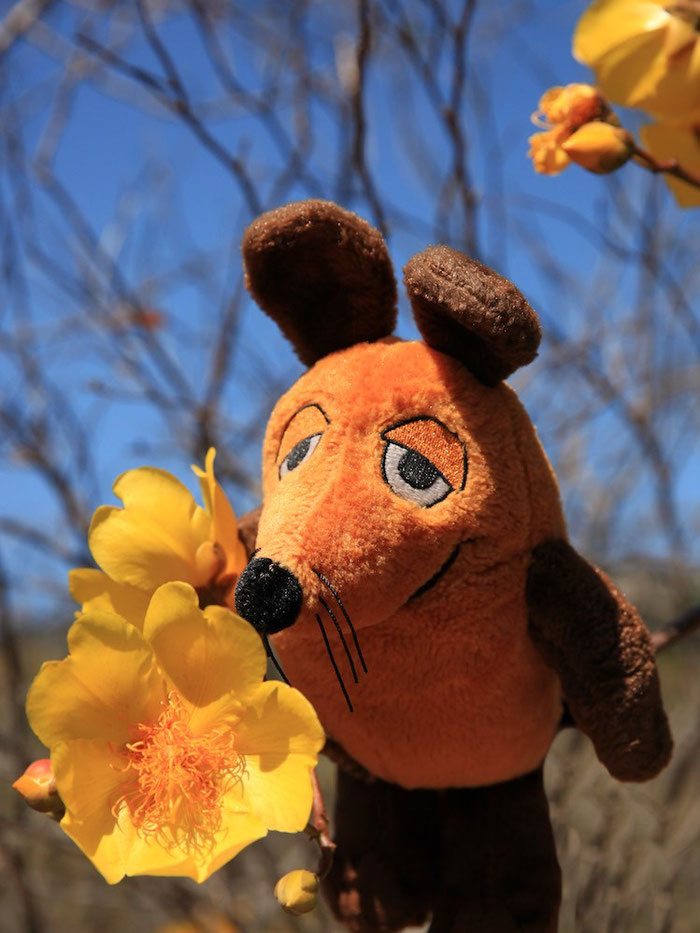 Unsere Maus liebt die Blumen.