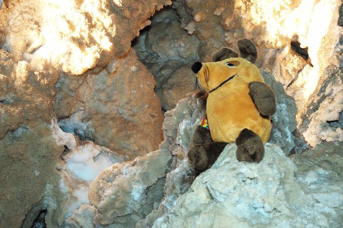 Höhlenforscher Maus, die 1.
