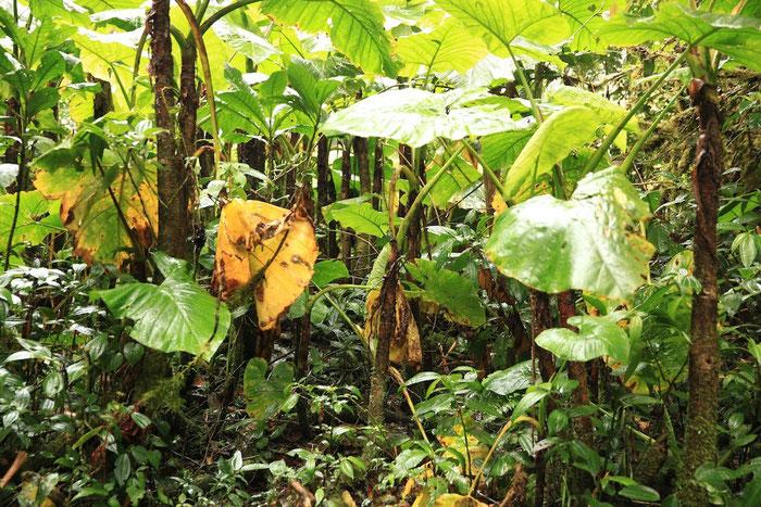 Finde den Quetzal - wir haben ihn nicht entdeckt :-(