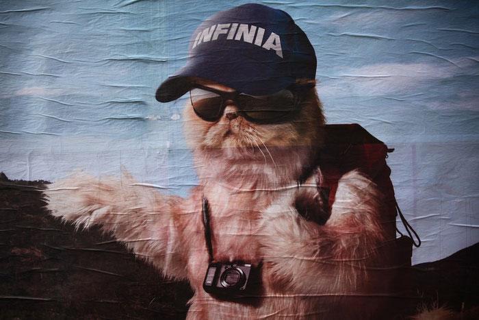 Werbebild mit Katze II