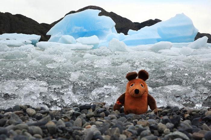 Maus in den Eisbergen