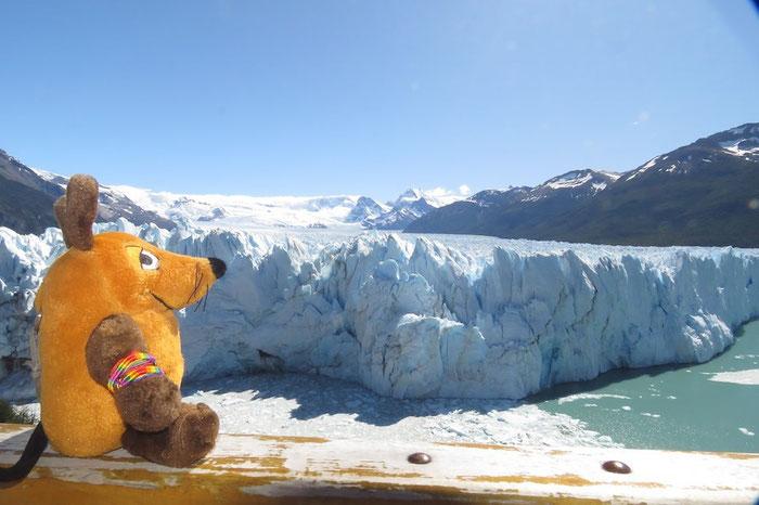 Maus bestaunt den beeindruckenden Gletscher Perito Moreno