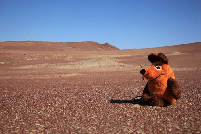 Maus auf dem Mars ?