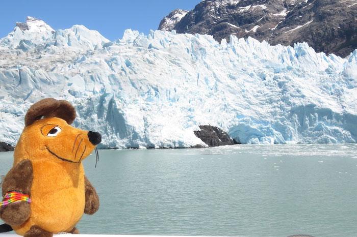 Maus vor dem Gletscher Spegazzini