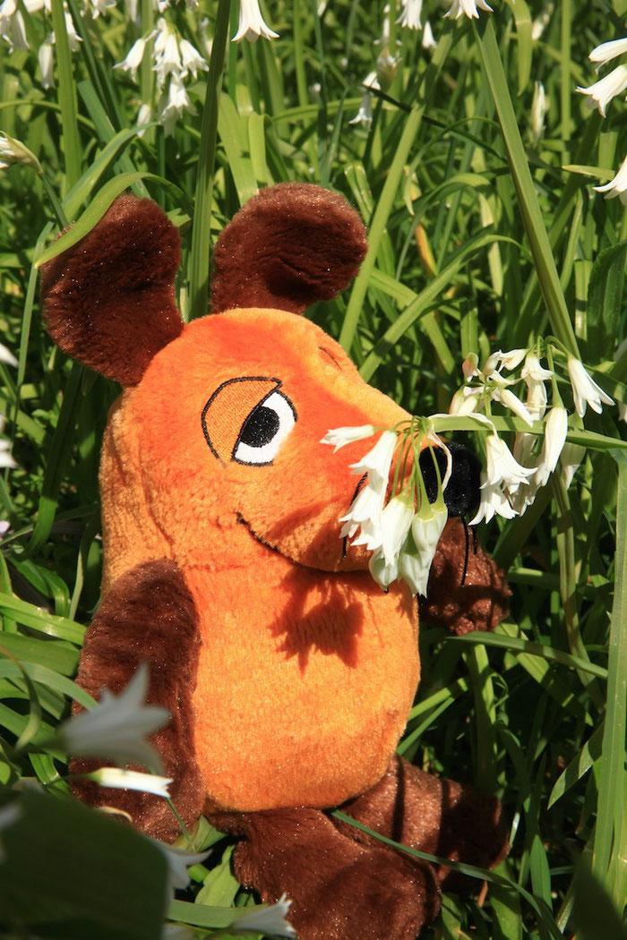 Es ist Frühling in Neuseeland und überall blühen jetzt die Blumen. Ich bin ganz berauscht von den vielen Düften !