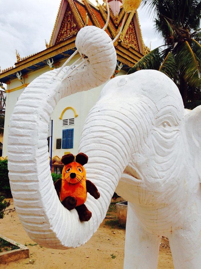 Auch weiße Elefanten üben ein unglaubliche Anziehungskraft auf unsere Maus aus.