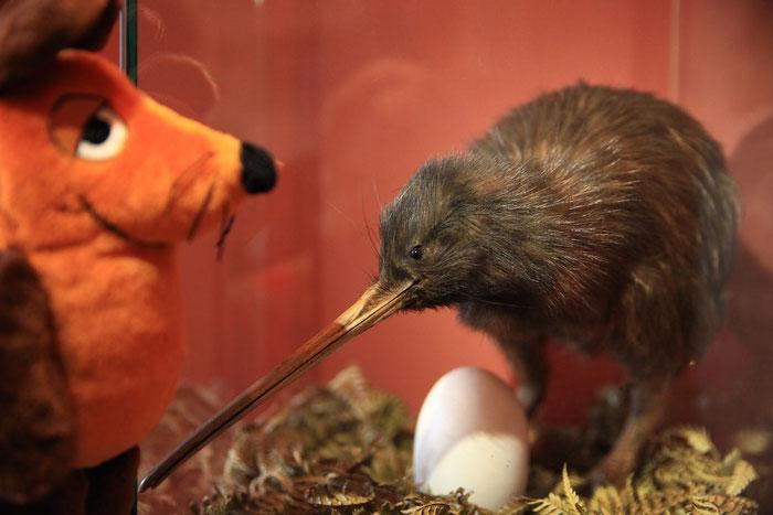 Der Beweis: Maus und Kiwi sind gleich groß.