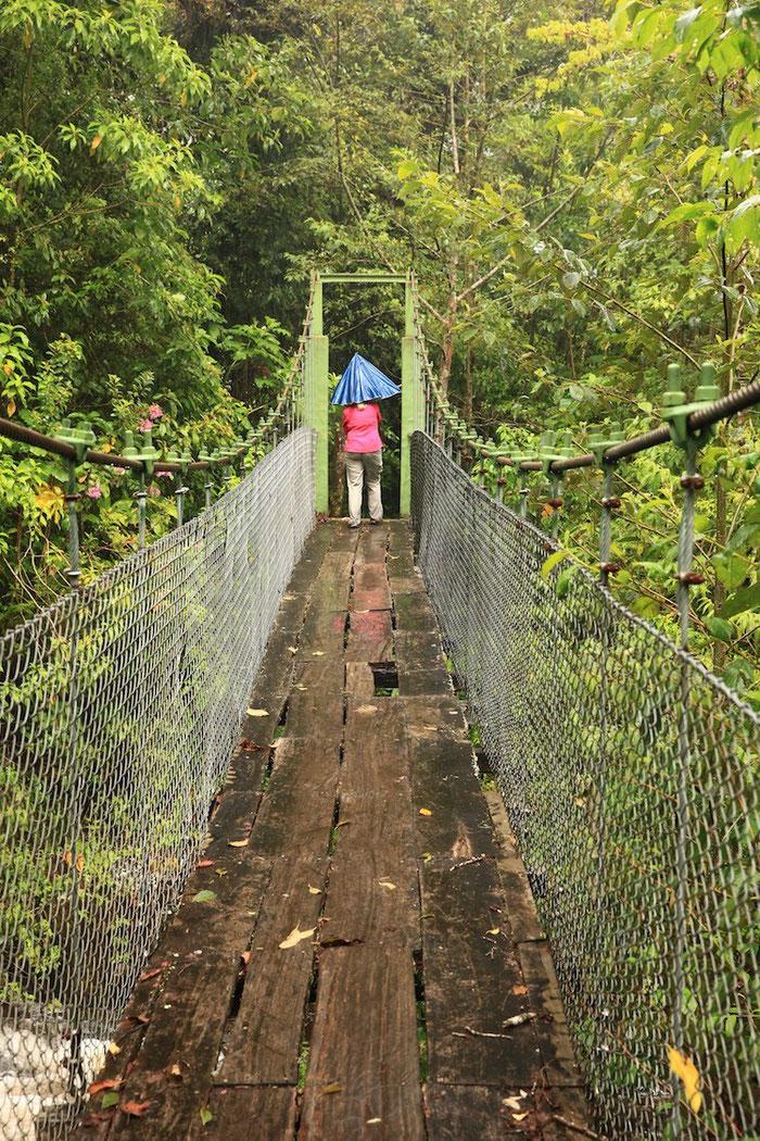 Leider gab es auf unserem Weg durch den Regenwald nur eine Brücke - und der Zustand war nicht unbedingt Vertrauen erweckend.