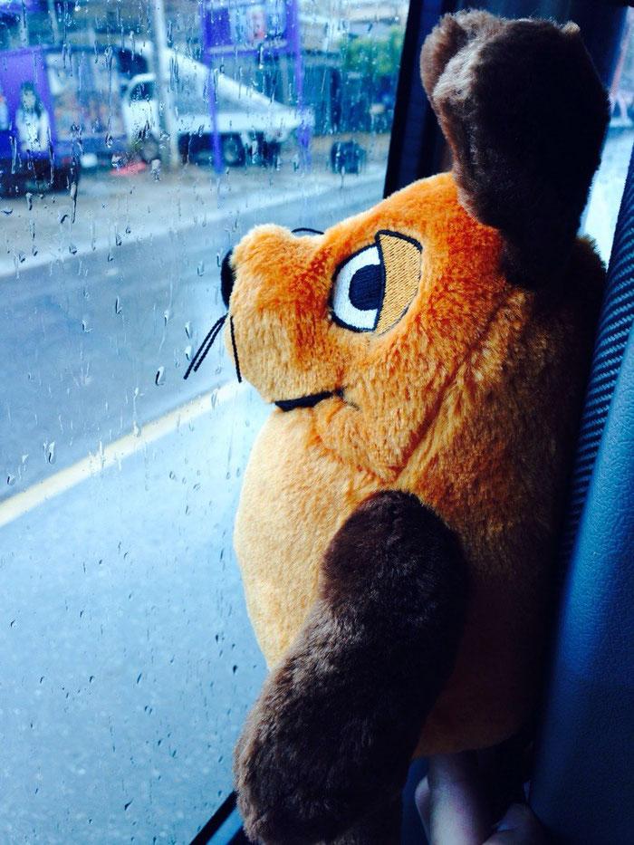 Unsere Maus will noch einen letzten Blick auf Kampot erhaschen und drückt sich im Bus ihre Nase platt.