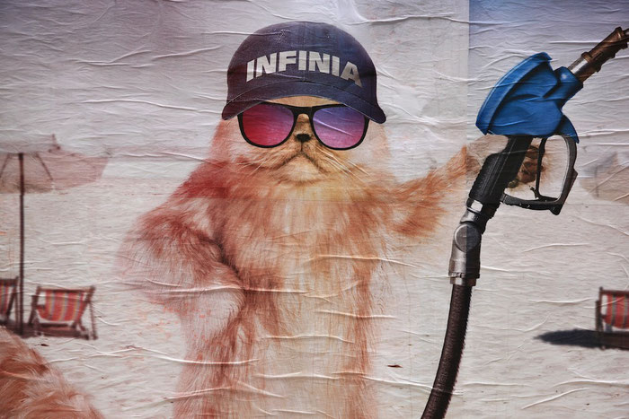 Werbebild mit Katze III