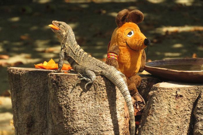 Die tapfere Maus mit Reptil Nummer 1 .......