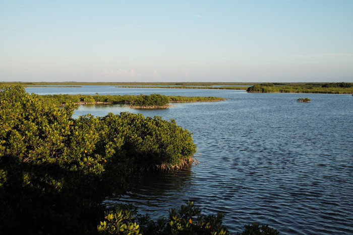 Die Mangroven von Key West im Schein der untergehenden Sonne.