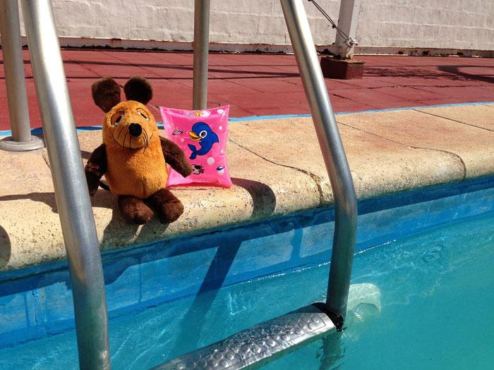 Maus überlegt noch, ob sie mit Schwimmhilfe in den Pool gehen soll oder lieber das Fell trocken lässt :-)