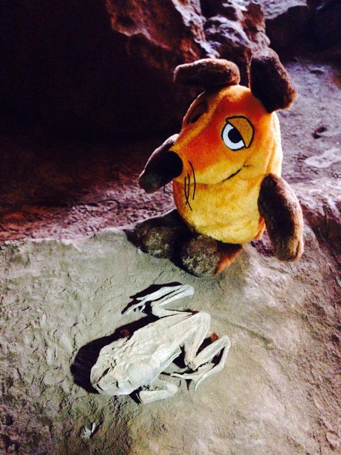 Maus fand auch einen mumifizierten Frosch. Hmm, lecker !