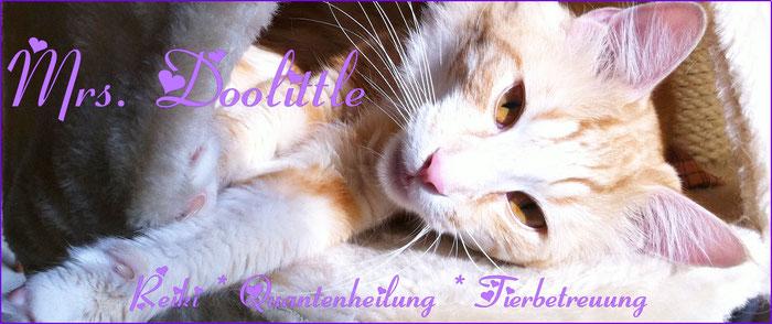 Mrs. Doolittle - Reiki,  Quantenheilung für Tiere, Tierbetreuung Wedemark