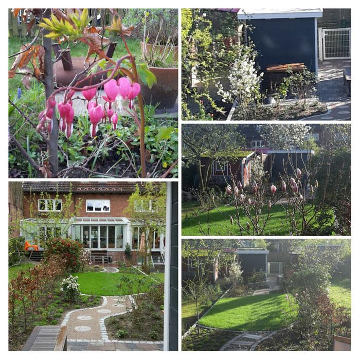 Bild: Sonne, Garten, Magnolie, Blumen, Traumgarten, Hamburg, Gartenhaus