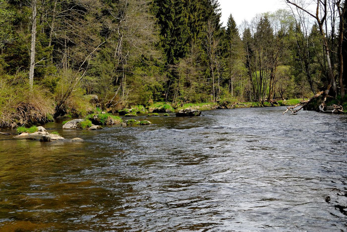 "The ""Schwarzer Regen"" in Bavaria, Germany. Ideal for fly fishing with a flyrod 