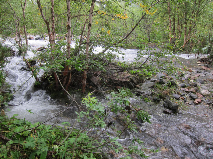 Small stream out of control, Tarradalen, Padjelantaleden