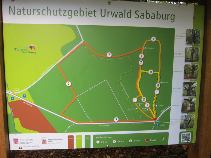 "Map of the ""Urwald Sababurg"" nature reserve, Reinhardswald"