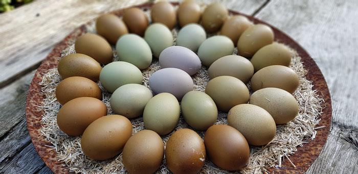Grüne Eier unserer Mooshühner