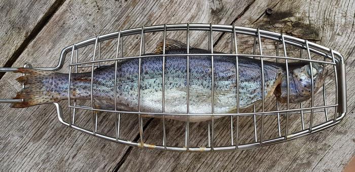 Forelle, Forellenzucht, Teichwirtschaft, Fisch, Grill