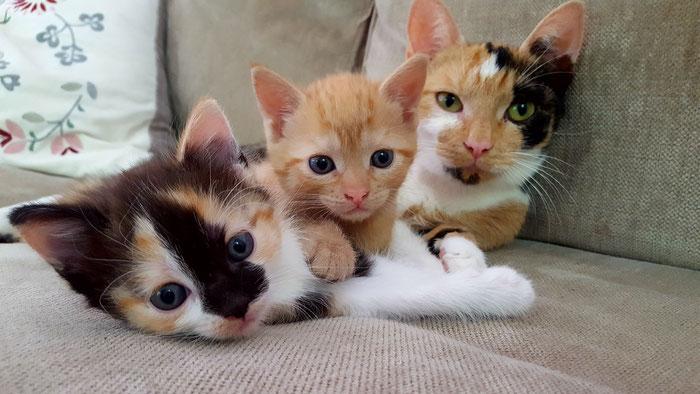 Katzen, Babys, Kitten, Tiger, Glückskatze, Katzenmama