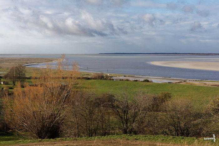 Conflit de génération entre Goélands Argentés - Port de la Cotinière - Ile d'Oléron - Béanico-Photo
