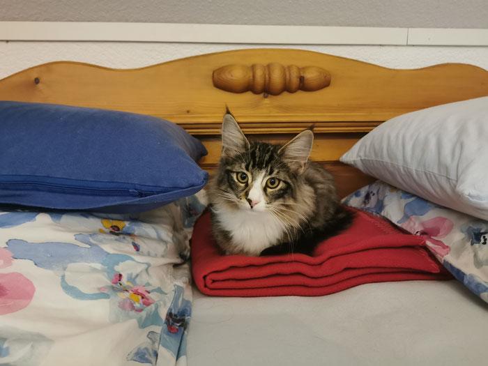 Gleich mal den besten Platz im Bett sichern...