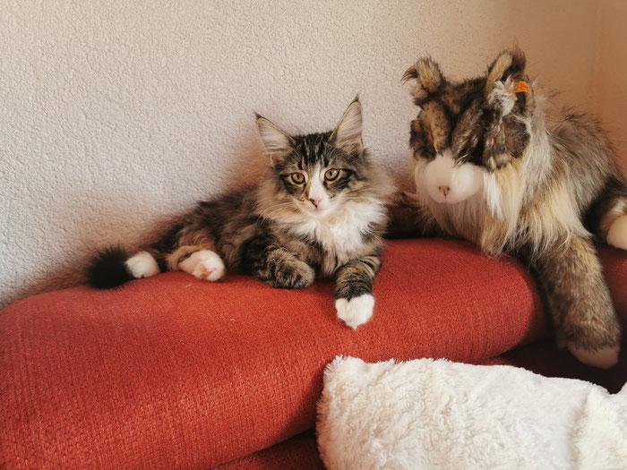 Ach ja, auf dem Sofa ist es auch ganz nett :-)
