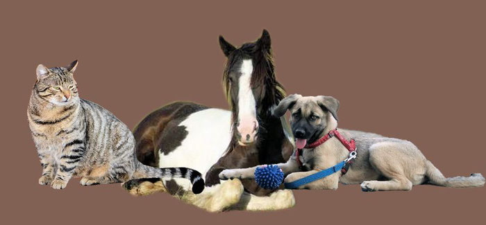 Tierheilkundezentrum Claudia Nehls Online Shop