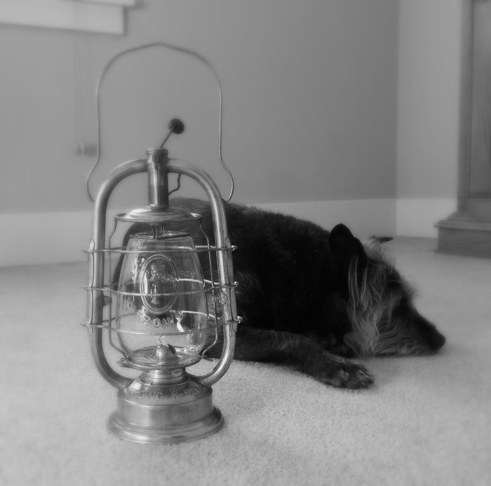 Frohlich & Wolter Kerosene Lantern Nr. 520 with embossed dog on globe