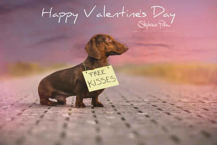 Valentinstag Roter Rudi vom Rehsprung Standard Kurzhaardackel