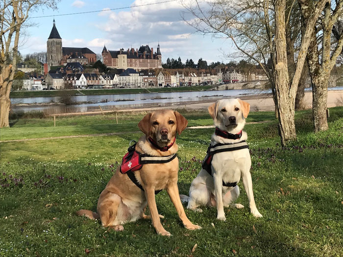 Asiatischer Laubholzbockkäfer Spürhunde Schweiz
