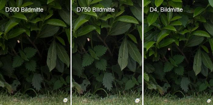Praxistest NIKON D500: Testbild Parkszene, Crop Bildmitte mit D750 vs. D4, Foto: bonnescape