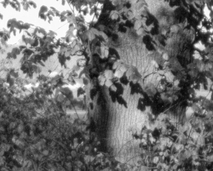 Ausschnitt Offenblende: Landschaftsaufnahme mit dem 95 Jahre alten Laack Polyxentar 6.8/135 mm, Foto: bonnescape.de